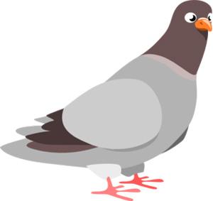 تست هوش پرواز کبوتر با جواب , تست هوش