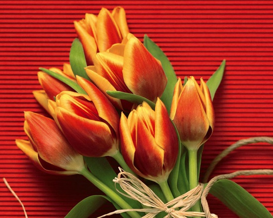دانلود تصاویر پس زمینه گل های دیدنی و زیبا
