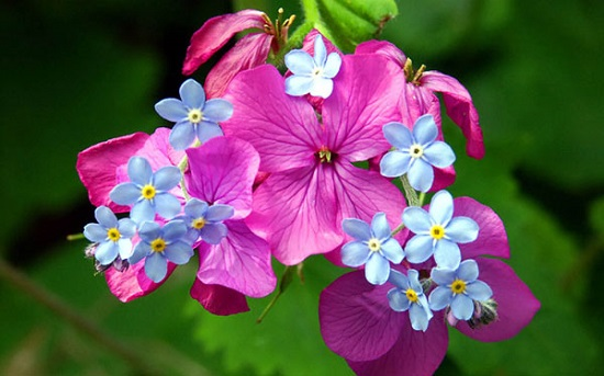 عکس گل های زیبا برای پس زمینه