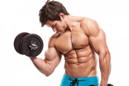 عضله سازی , افزایش حجم عضلات