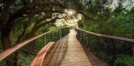 زیباترین پل جهان بر فراز جنگل + عکس