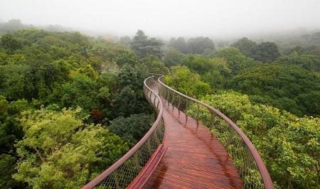 """باغ گیاه شناسی ملی """"کریستن بوش""""، """"Kirstenbosch"""""""