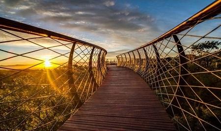 زیباترین پل پیاده راه جهان بر فراز جنگل + عکس