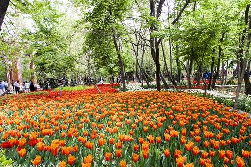 مهمانان خندوانه علی محمد مختاری کیست اینستاگرام خندوانه اخبار شهرداری تهران