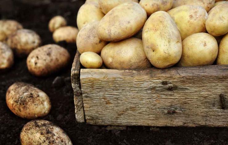 6 ماده غذایی که نباید خام مصرف شود
