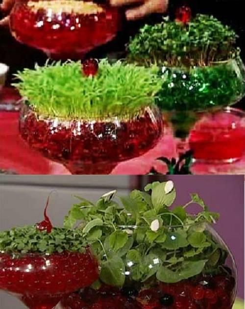 روش کاشت سبزه با خاک ژله ای