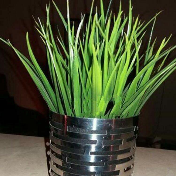 کاشت سبزه با کنجد کاشت سبزه عید با هسته خرما | حیاط خلوت