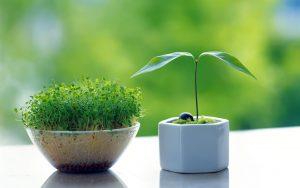 بهترین زمان برای کاشت انواع سبزه عید