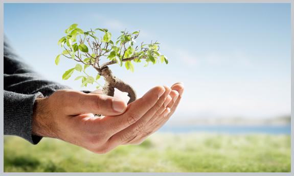 متن زیبای روز درختکاری،روز درختکاری