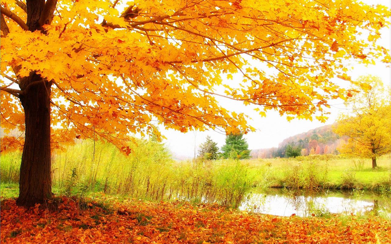 عکس های فصل پاییز با کیفیت hd