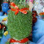 کاشت سبزه عید روی کوزه