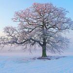 تصاویر پس زمینه HD زیبا و دیدنی از زمستان