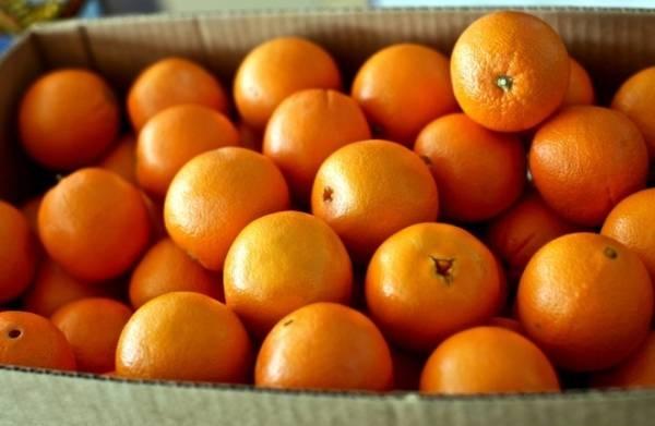 امسال عید کمتر پرتقال بخورید