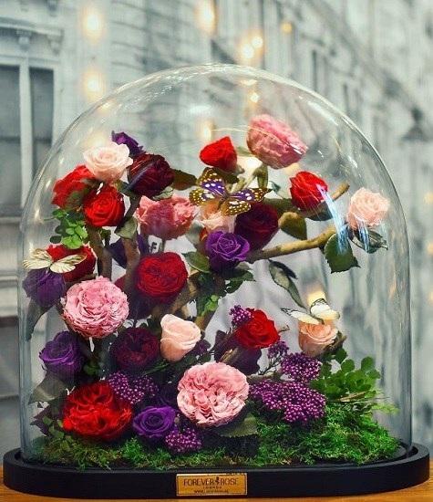 گل رزهایی بسیار زیبا که سه سال عمر می کند