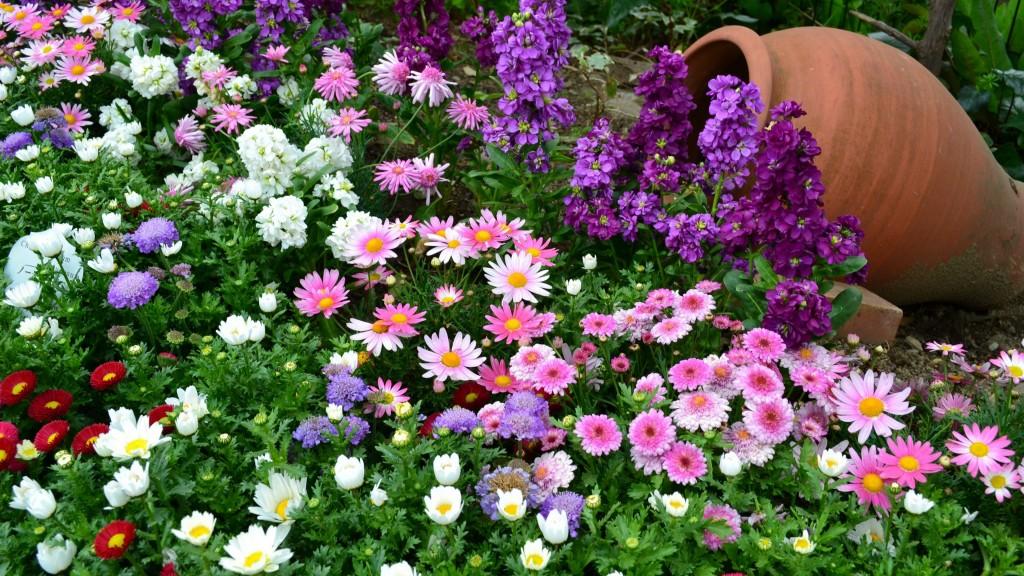 عکس گل با کیفیت HD برای تصویر پس زمینه و پروفایل
