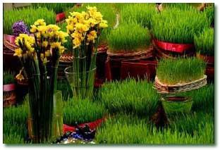 سبزه با تخم چمن