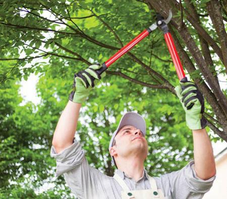 آموزش کامل و تصویری هرس درختان در اسفند ماه