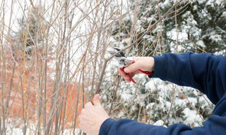 آموزش کامل و تصویری هرس درختان پیش از بهار