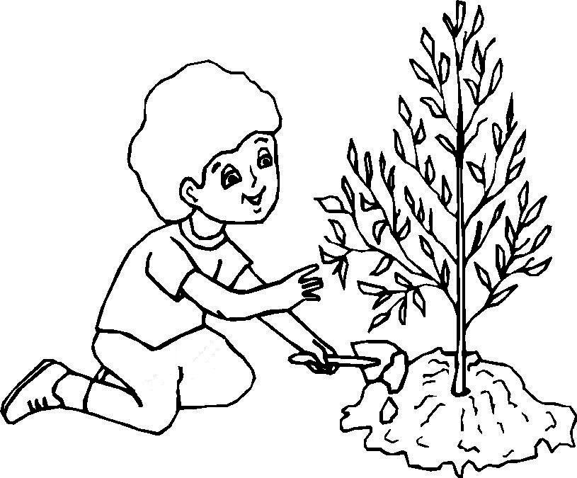 نقاشی روز درختکاری