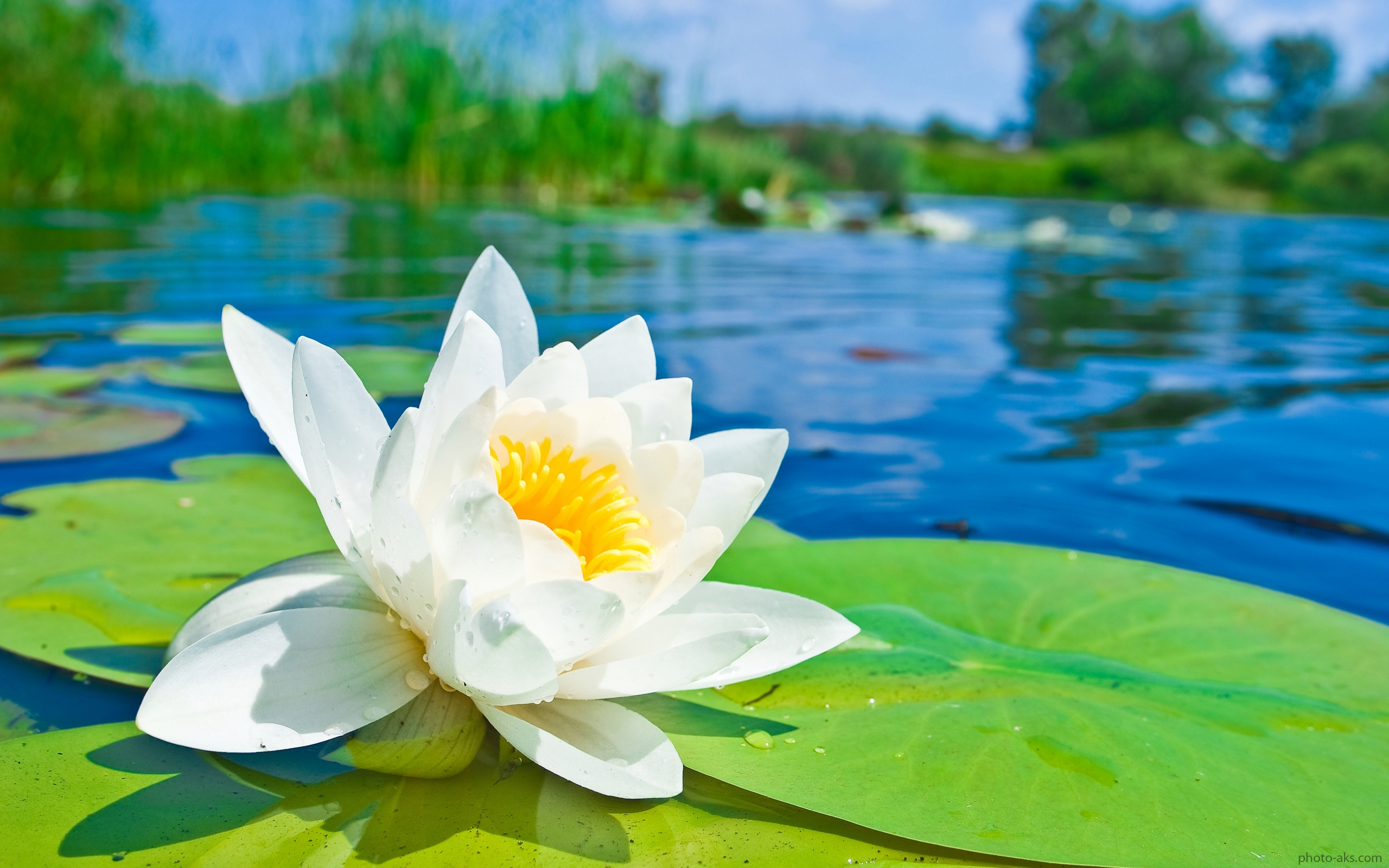 دانلود عکس گل با کیفیت بالا برای پروفایل