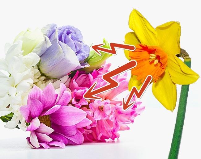 افزایش طول عمر گل