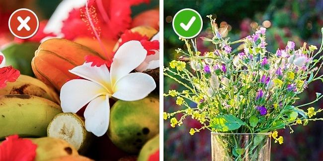 نگهداری از گل ها