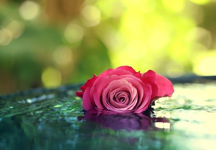 دانلود رمان گل رز صورتی