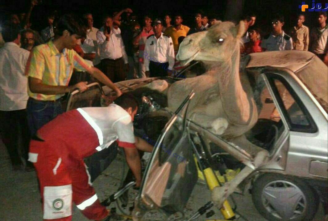 تصادف مرگبار شتر با پراید 7 کشته و زخمی برجای گذاشت+عکس