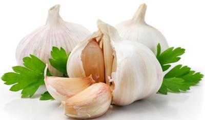 انواع سیر در طب سنتی و خواص آن ها