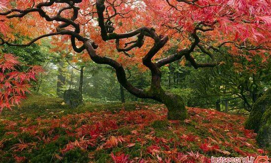 معرفی عجیب ترین و زیباترین درختان جهان+تصاویر