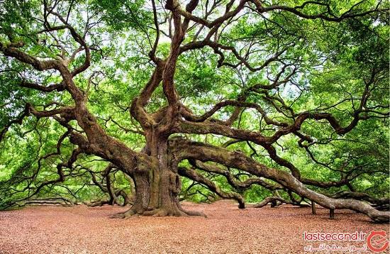معرفی عجیب ترین و زیباترین درختان جهان +عکس