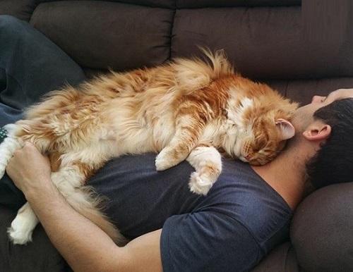 بزرگ ترین و عجیب ترین گربه جهان+ عکس