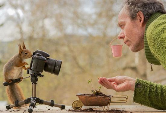 سنجاب هایی که با عکاس خود دوست شدند+تصاویر