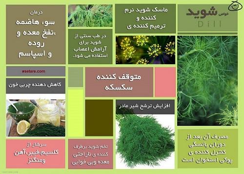 9 خاصیت فوق العاده سبزی شوید را بشناسید+ عکس