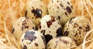 فواید تخم بلدرچین برای کودکان