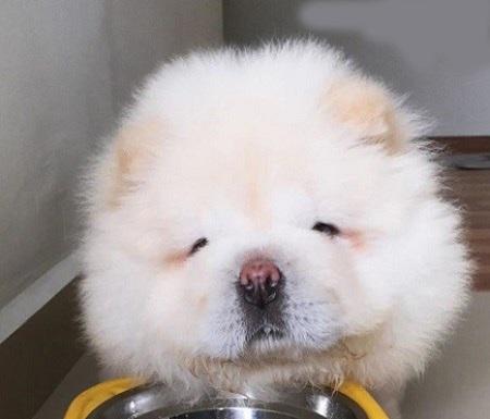 توله سگ بامزه در اینستاگرام