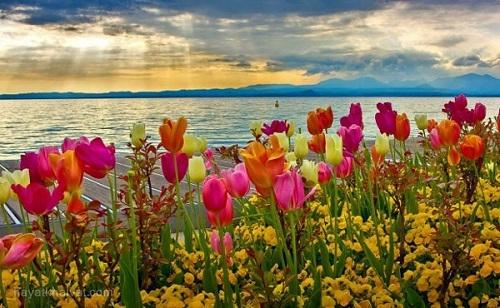 عکس طبیعتبهاری زیبا،عکستلگرامطبیعت،عکسپروفایلگل