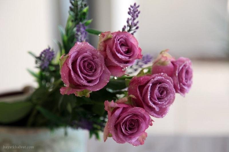 عکس گل برای بک گراند با کیفیت بالا