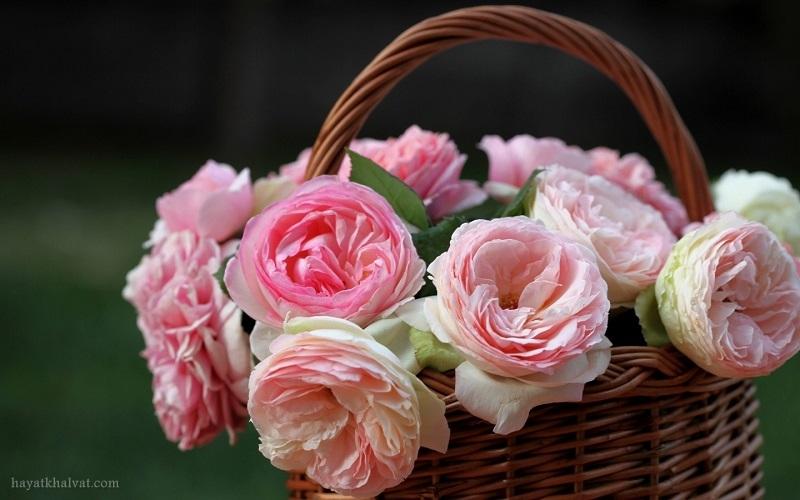عکس گل برای بک گراند و پس زمینه با کیفیت بالا