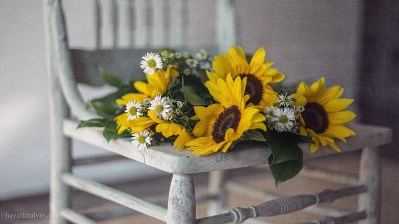 عکس گل برای پس زمینه با کیفیت HD