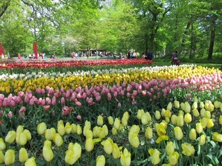 تصاویر پارک کوکنهوف در هلند
