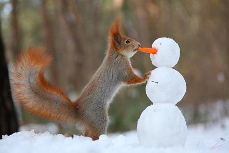 پروفایل زمستان و برف
