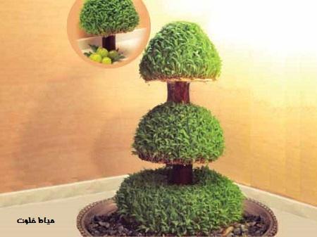 سبزه درختی