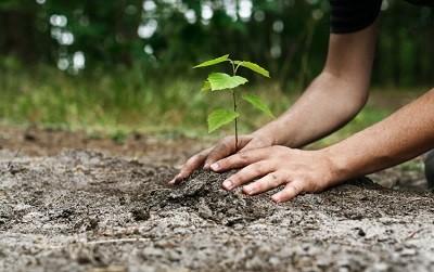 فواید درخت و درختکاری