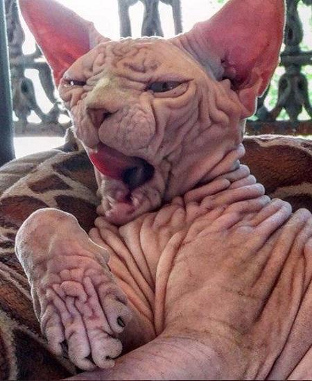 عکس گربه ترسناک اینستاگرام ، اسم گربه ترسناک اینستاگرام
