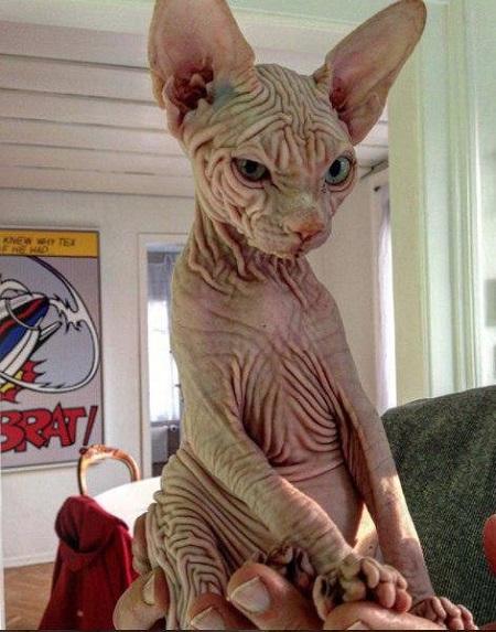 عکس گربه ترسناک اینستاگرام