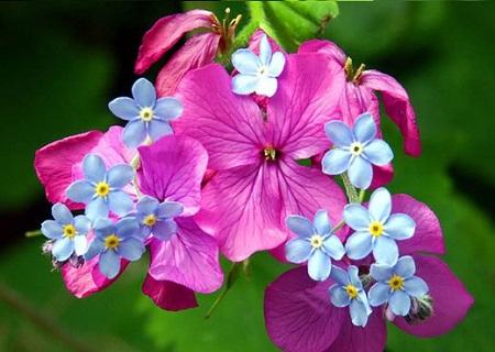عکس طبیعت بهاری برای پروفایل ، پروفایل گل