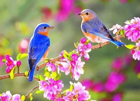 دانلود عکس پرنده برای پروفایل ، عکس پروفایل پرنده زیبا