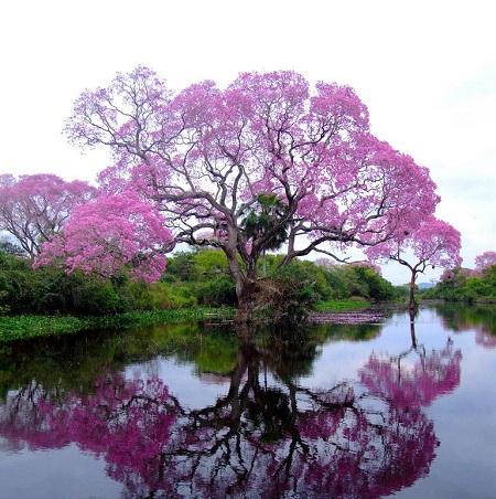 عکس های زیبا از طبیعت برای پروفایل