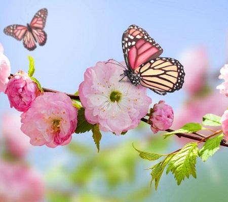 عکس های طبیعت بهاری و عکس نوشته پروفایل بهاری زیبا